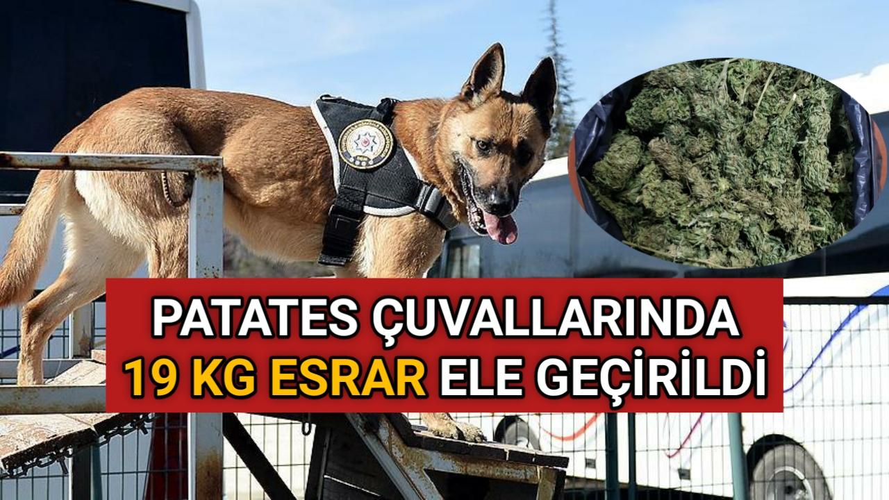 PATATES ALIRKEN DİKKAT..