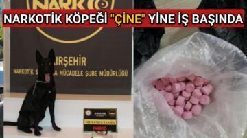"""NARKOTİK KÖPEĞİ """"ÇİNE"""" YİNE İŞ BAŞINDA"""