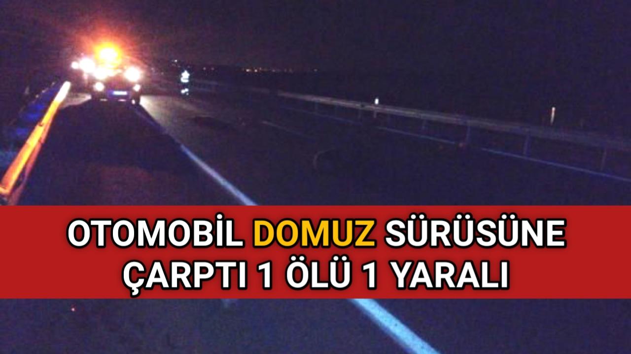 KIRŞEHİR' DE DOMUZA DİKKAT ! 1 ÖLÜ 1 YARALI
