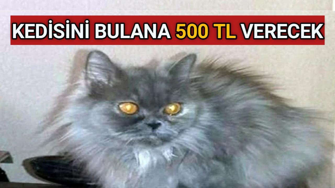 KIRŞEHİR'DE KAYBOLAN KEDİSİNİ BULANA 500 TL VERECEK