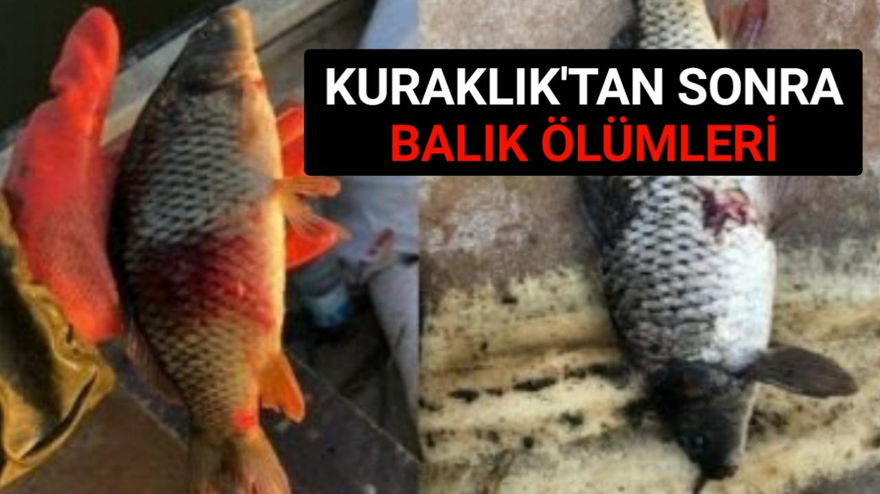BALIKLARDA PARAZİT VAR 'TÜKETMEYİN' UYARISI